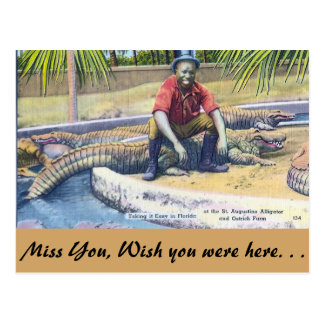 Taking it Easy in Florida Postcard