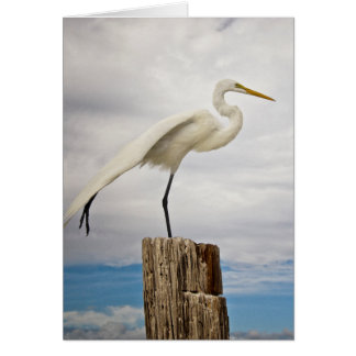 Talented Egret | Fort Myers Beach, Florida Card