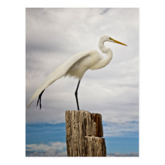 Talented Egret | Fort Myers Beach, Florida Postcard
