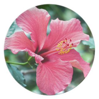 TALK HIBISCUS FLOWER PLATE