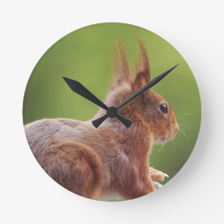 TALK SQUIRREL - Photography Jean Louis Glineur Round Clock