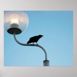 Talking Crow Print