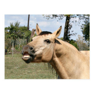 Talking horse postcard