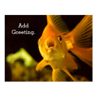 Talking Too Much Goldfish Postcard
