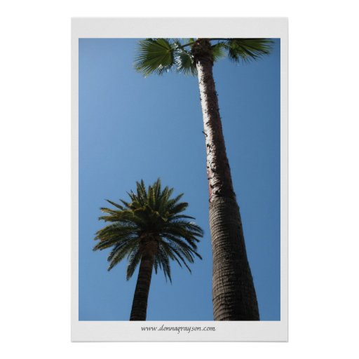 Tall California Palm Trees Poster Print