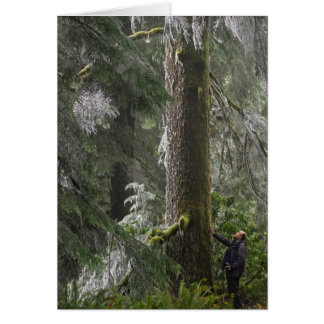 Tall Douglas Fir in Oregon's Elliott State Forest Card