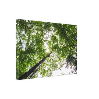 Tall Elegant Trees Canvas Print