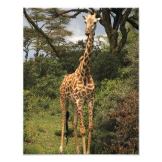 Tall Giraffe in Bushes Photo Print