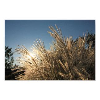 Tall Grass and Sunset Photograph
