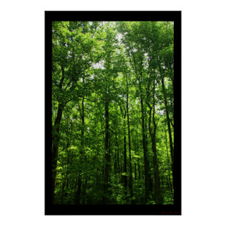 Tall Green Trees Poster #6183