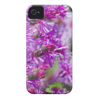Tall Ironweed Wildflowers iPhone 4 Case-Mate Case