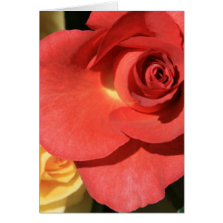 tall red rose card