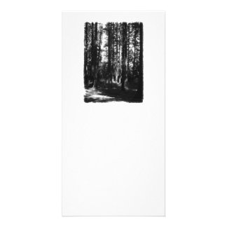 Tall Trees in Black and White Personalized Photo Card