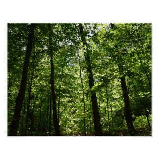 Tall Trees in Nature Poster