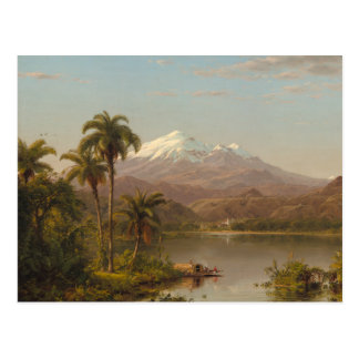 Tamaca Palms along the Magdalena River in Colombia Postcard