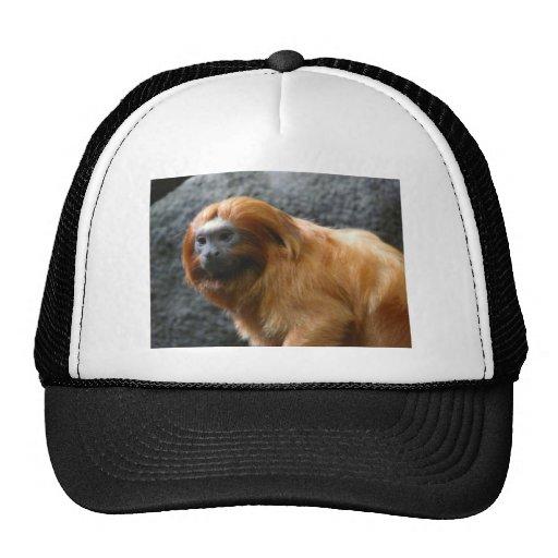 tamarin monkey hat