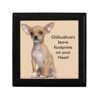 Tan and White Chihuahua Gift Box