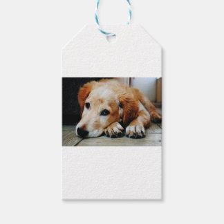 Tan and White Short Coat Dog Gift Tags
