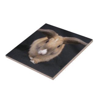 Tan Bunny Photo Tile