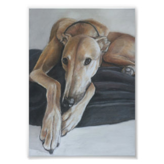 Tan Greyhound Dog Art Photo Print