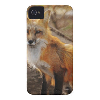 Tan White Fox iPhone 4 Case-Mate Case
