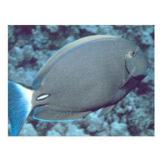 Tang Fish Postcard