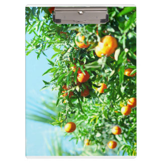 tangerine clipboard