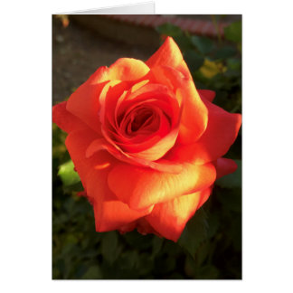 Tangerine Dream Rose Card