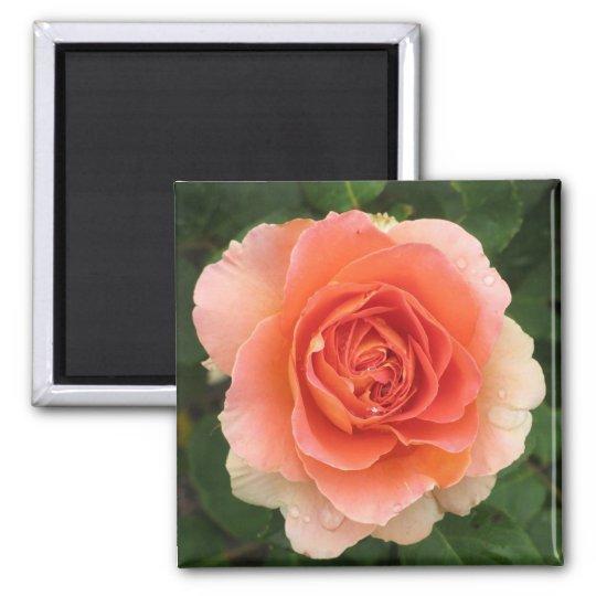 Tangerine Rose Magnet