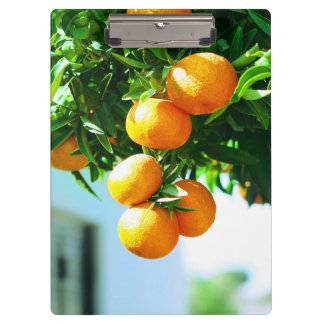 tangerines at branch. fruit collection clipboard