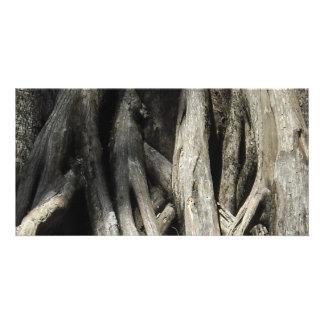 Tangled Cypress Custom Photo Card