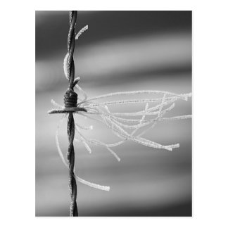 Tangled Threads - Barb Wire Still Life Photograph Postcard