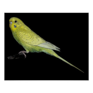 Tango budgie poster