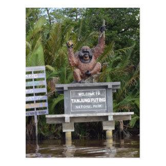 Tanjung Putting National Park, island of Borneo Postcard