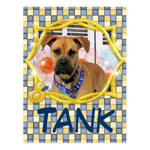 Tank - Boxer Mix Post Cards