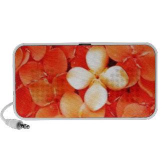 Tantalizing Tangerine Orange Blossoms Nature Flora Travel Speaker