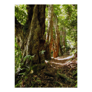 Tantalus Hiking Path Poster