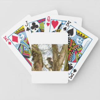 TANY FROGMOUTH QUEENSLAND AUSTRALIA BICYCLE PLAYING CARDS