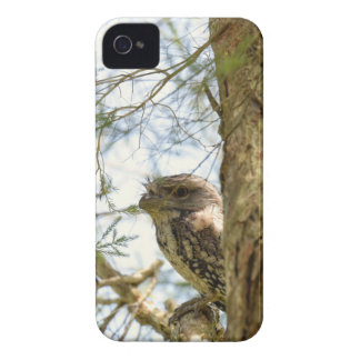 TANY FROGMOUTH QUEENSLAND AUSTRALIA Case-Mate iPhone 4 CASE