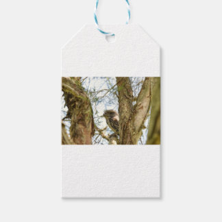 TANY FROGMOUTH QUEENSLAND AUSTRALIA GIFT TAGS