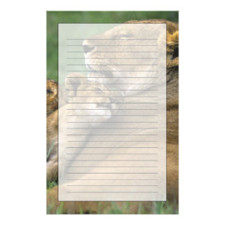 Tanzania, Ngorongoro Crater. African lion mother Custom Stationery