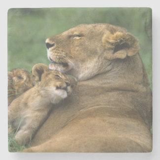 Tanzania, Ngorongoro Crater. African lion mother Stone Coaster