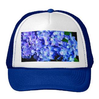 Tanzanite  Hydrangeas Cap