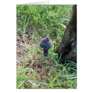 Tapestry Mushroom Card