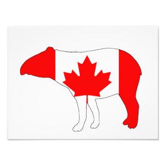 Tapir Canada Photo Print