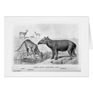 Tapir-like animals art card