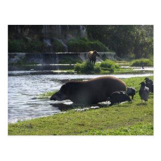 Tapir Taking A Dip In The River Postcard