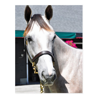 Tapit -Rote Hip #140 Postcard