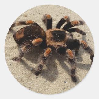 Tarantula brachypelma red knee poisonous classic round sticker