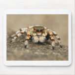 Tarantula Jumping Bird Spider awesome accessories Mouse Pads